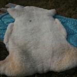 Peau de mouton, tannage classique