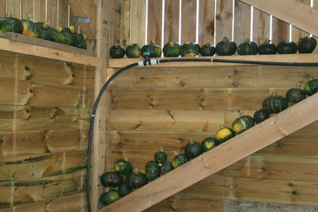 stockage courges