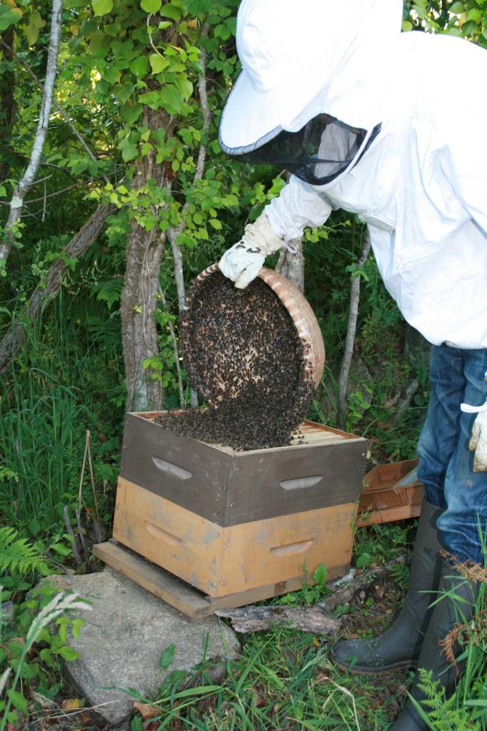 Dans la ruche!