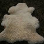 Peau de mouton, tannage biologique écorce de mimosa